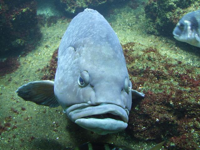Lippenfisch