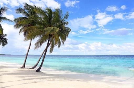 Palmen am Strand, Amilla Fushi, Malediven