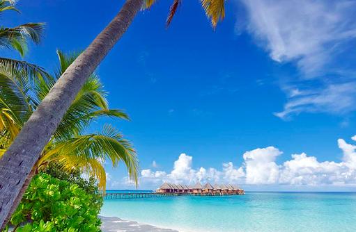 Traumstrand mit Palme, Angaga Island Resort & Spa, Maldives
