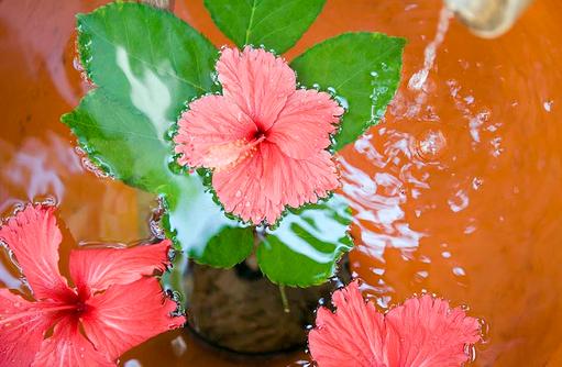 Hibiskus Wasser, Spa, Angsana Ihuru, Malediven
