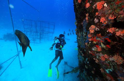 Tauchen, Riff, Korallen, Angsana Ihuru, Malediven