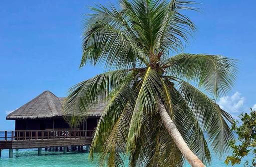 Palme am Meer, Fotomotiv, Bandos Maldives