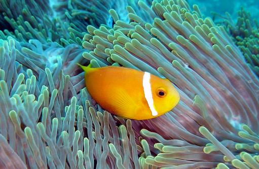 Tauchaufnahme, Canareef Resort, Malediven