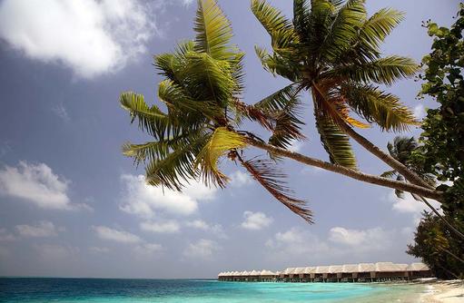 Kokospalme und Strand, Coco Bodu Hithi, Maledives