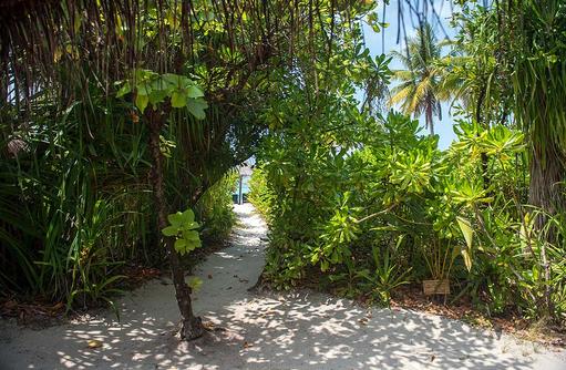 Weg zum Strand von einer Beach Villa, Coco Palm Dhuni Kolhu, Malediven