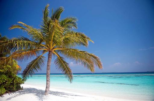 Traumkulisse, weißer Sandstrand und Kokospalme, Coco Palm Dhuni Kolhu, Malediven