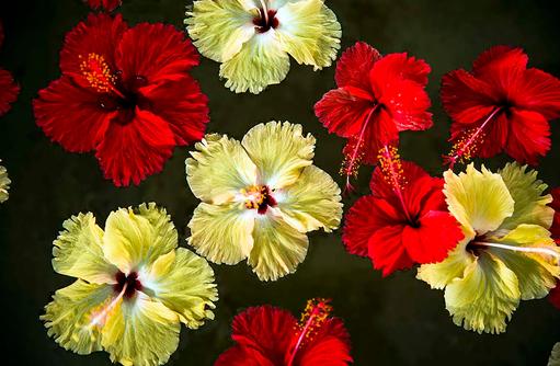 Blüten, COMO Maalifushi, Maldives