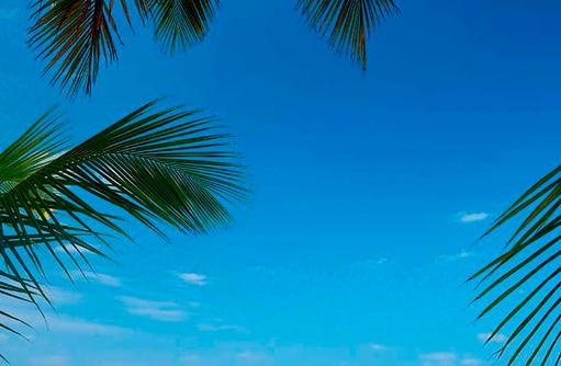 Blick durch die Palmen auf Water Villas, Constance Halaveli Resort, Maldives