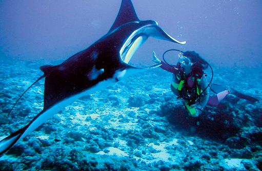 Tauchen mit Manta, einzigartiges Erlebnis, Bucket List, Constance Moofushi Resort, Malediven