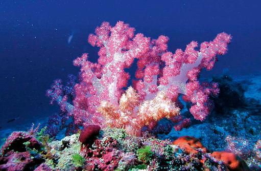 Korallengarten, Hausriff, Constance Moofushi Resort, Malediven