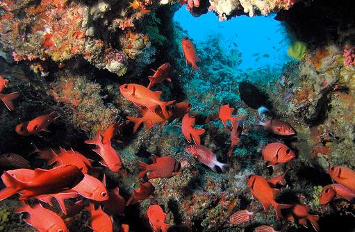 butens Unterwasserparadies, Hausriff, Constance Moofushi Resort, Malediven