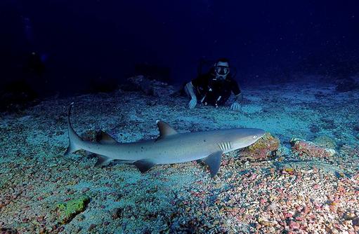 Taucher, Hai in Sicht, faszinierende Unterwasserwelt, COOEE OBLU at Helengeli, Maldives
