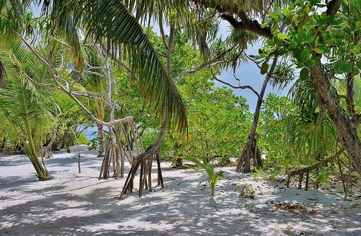 Blick ins Grüne, Natur, COOEE OBLU at Helengeli, Maldives