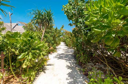 Inselwege im Dhigufaru Island Resort