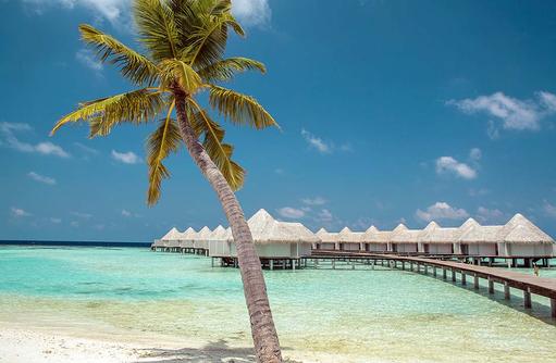 Blick auf die Water Villen, Kokospalme, Drift Thelu Veliga Retreat, Malediven