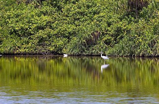 Mangroven auf der Insel Gan, Equator Village