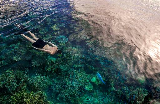 Schnorcheln am Hausriff, Four Seasons Resort Maldives at Landaa Giraavaru