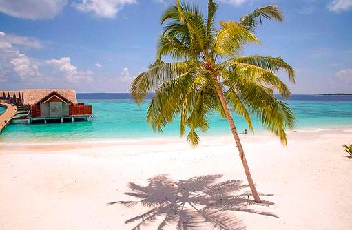 Palme am Strand, Furaveri Island Resort & SPA, Maldives
