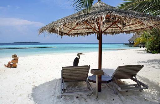 Relaxen in der Sonne im Sand, Fischreierauf der Sonnenliege, Gangehi Island Resort, Maldives