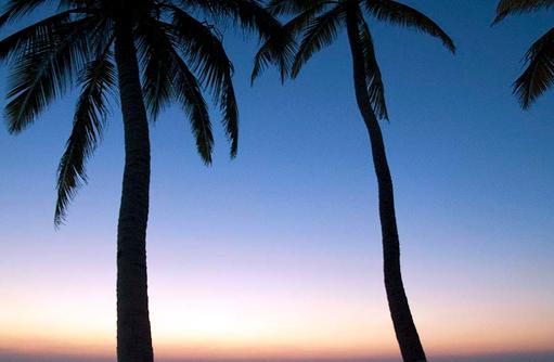 Palmen im Sonnenuntergang, Innahura Maldives Resort