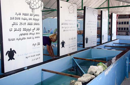 Tour zur Auffangsstation für Meeresschildkröten auf Naifaru I Kanuhura Maldives