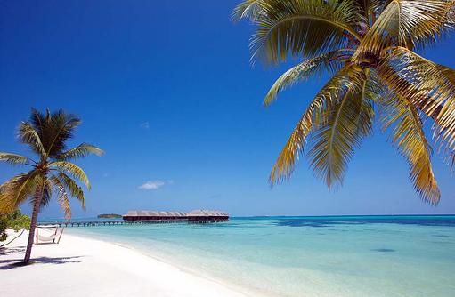 Urlaubsträume werden wahr, weißer Sandstrand, Palmen, Hängematte I LUX South Ari Atoll