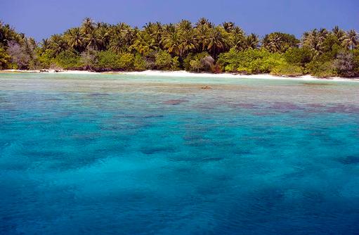 Palmenstrand, klares Wasser, Hausriff I LUX South Ari Atoll