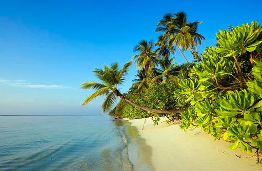 Traumstrand mit Kokospalme I LUX South Ari Atoll