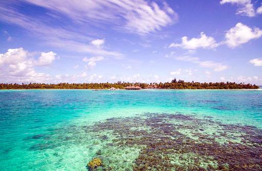 Korallen, Medhufushi Island Resort, Maldives
