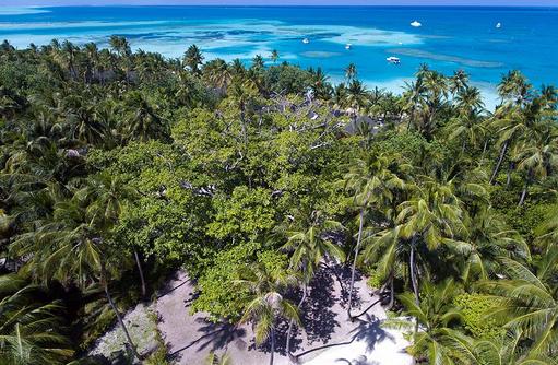 grüner Dschungel im Innselinneren, Meeru Island Resort