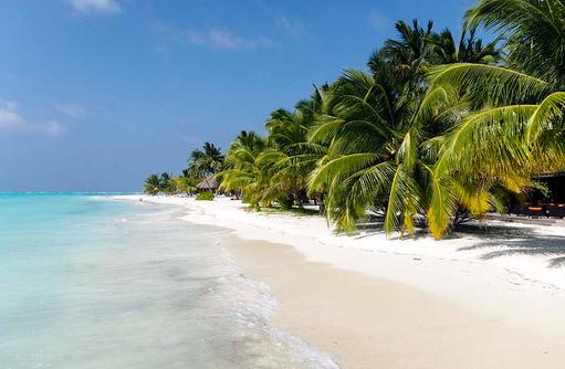 weißer Sandstrand, Kokospalmen, Meeru Island Resort