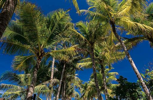 Palmen der Insel, OBLU SELECT at Sangeli