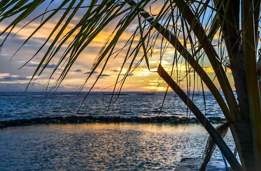 Sonnenuntergang und Palmwedel I Palm Beach Island