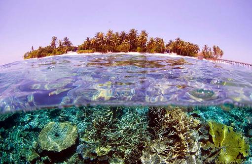 Unterwassersicht,  Park Hyatt Maldives Hadahaa, Maldives