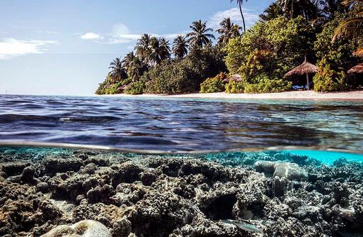 Paradiesisch über und unter Wasser I ROBINSON Club Maldives