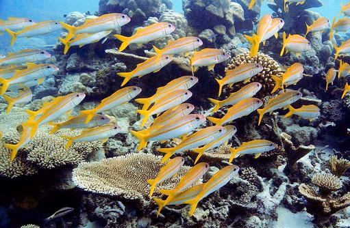 bunte Unterwasserwelt am Hausriff I ROBINSON Club Maldives