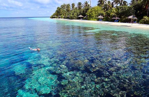 Schnorcheln am Hausriff I ROBINSON Club Maldives
