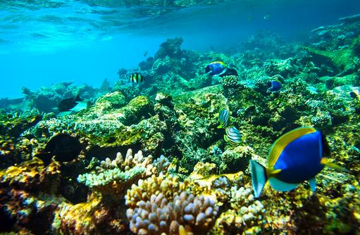 Artenreichtum am Hausriff I ROBINSON Club Maldives