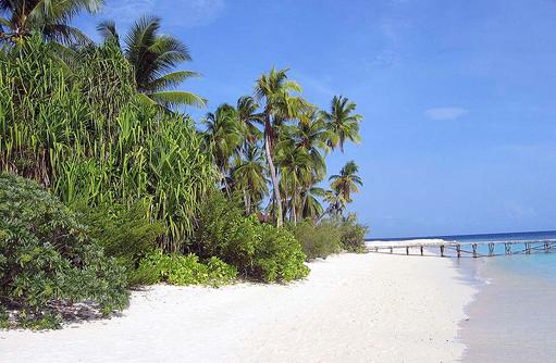 puderfeiner weißer Sandstrand und üppiges Grün I ROBINSON Club Maldives