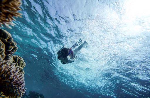 Schnorcheln, intaktes Hausriff, Korallen I ROBINSON Club Maldives