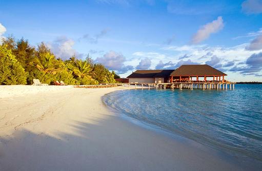 Palmen, Summer Island Maldives