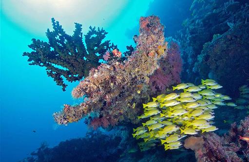 Unterwasserwelt, Tauchen, Korallen, Sun Aqua Vilu Reef Maldives