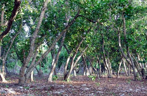 Nachhaltiger Tourismus I The Barefoot Eco Hotel