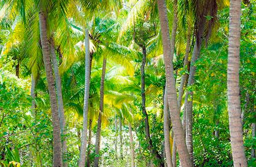 grünes Inselinnere mit Kokospalmen, Vakkaru, Maledives