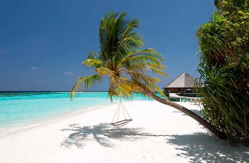 Hängematte an der Palme,  Vilamendhoo Island Resort, Maldives