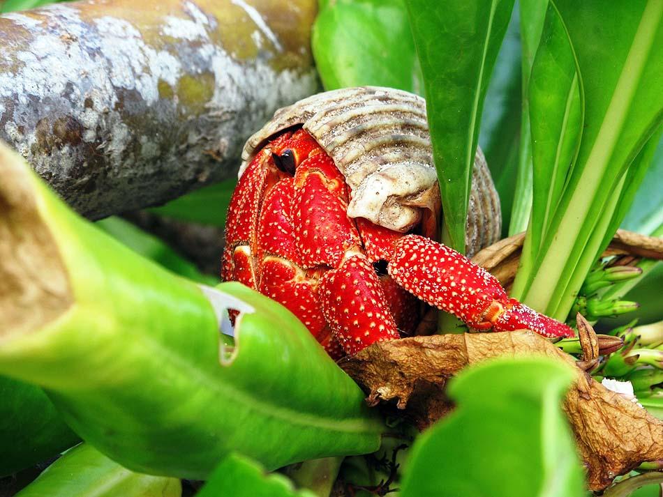große Artenvielfalt im Inselinneren I The Barefoot Eco Hotel